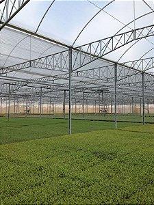 Filme Plastico para Estufa Agricola 8mx100m 100micra - Nortene