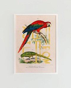 Quadro Decorativo Poster Alma da City Arara e Papagaio From Brasil