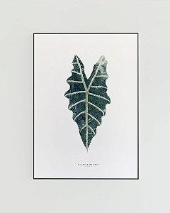 Quadro Decorativo Poster Planta Alocasia Amazônica - FlowersJuls, Pintura, Aquarela