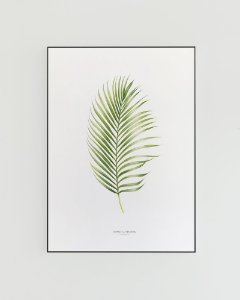 Quadro Decorativo Poster Planta Dypsis Lutescens, Areca-bambu - FlowersJuls, Aquarela