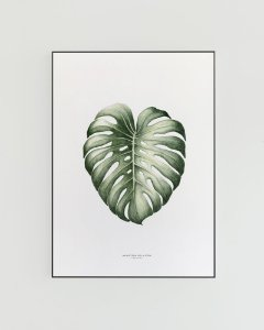 Quadro Decorativo Poster Monstera, Costela Adão - Flowersjuls, Aquarela