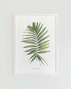 Quadro Decorativo Poster Folha Palmeira, Ptychosperma - Flowersjuls, Aquarela