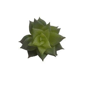 Suculenta Mini Verde