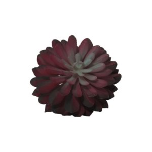 Suculenta Ensaiao Vermelha  W298-112