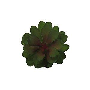 Suculenta Sedum Pluricaule 06710