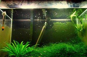 Serviços de manutenção de aquário
