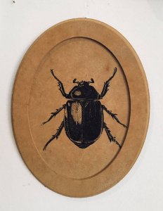 quadro serigrafia inseto