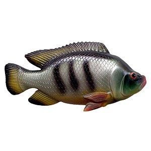 Peixe Tilápia de Parede