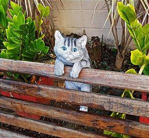 Gato Cute