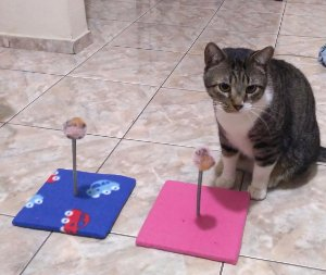 Brinquedo Arranhador Mola Divertida Para Gatos