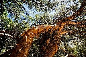Árvores das Nuvens - Quadros/Decorações