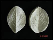 Molde de Silicone Marcador de Folhas