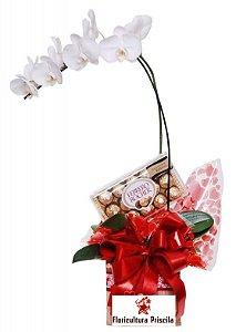 Orquídea e Ferrero Rocher - Sorriso de Luz