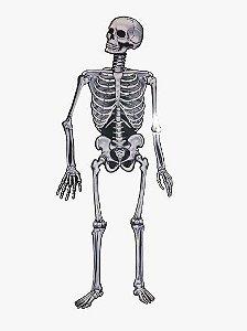 Placa / Painel esqueleto grande para decoração de Festas Halloween