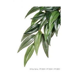 Planta Ruscus Small Exo Terra