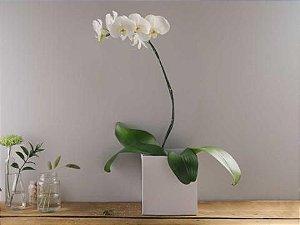 Orquídea no Cachepô de Papel