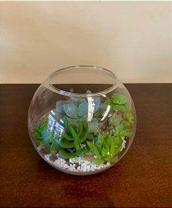 Terrário de vidro mini