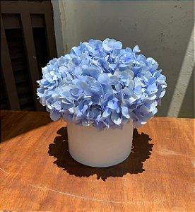 Box Flowers/Hortência Azul