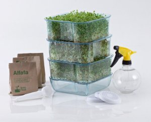 Kit Para Produção De Brotos Comestíveis - Broto Fácil