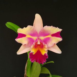 Blc. Mary Song x Blc. Chunyeah 17 - Adulta