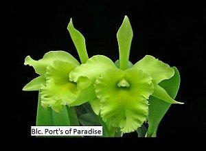 Blc. Port's of Paradise - Tamanho 3