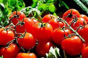 Fertilizante líquido adubo - Agrodubo Galão 5 Litros