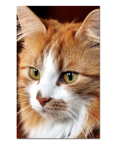 Ímã Decorativo Gato Siberiano - Pet Cat - IGAT03