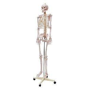 Modelo Anatômico do Esqueleto Humano 1,70m com Haste, Suporte e Rodas