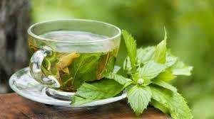 Chá de Erva de Santa Maria (Mentruz) - 30g