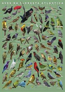 Pôster Aves da Mata Atlântica II