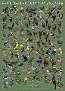 Pôster Aves da Mata Atlântica I