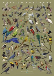 Pôster Aves do Pantanal