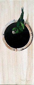 Tela Periquito-verde