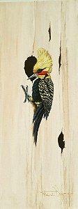 Tela Pica-pau-de-cabeça-amarela