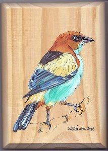 Arte em Madeira - Saíra-sapucaia