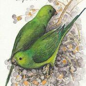Imã pequeno - Periquito-verde