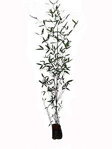 Bambu caniço