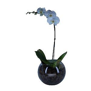 Assinatura de Orquídeas