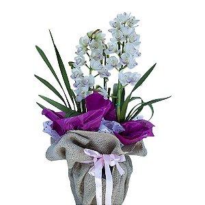 Orquídea Simbidium