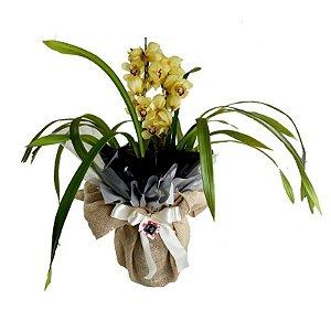 Orquideas Simbidium