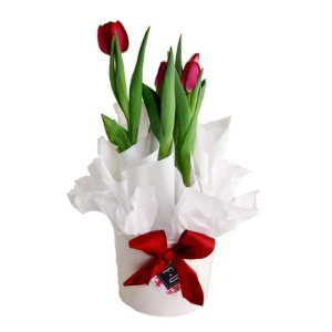 Tulipa Emablagem Branca