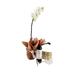 Kit de Orquídea Phalaenopsis