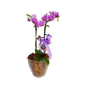 Mini Orquídea Phale