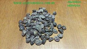 Argyreia Nervosa - Hawaiian Baby WoodRose 10 Sementes