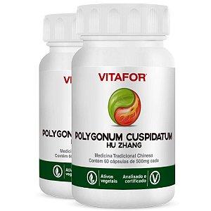 Kit 2 Polygonum Cuspid 500mg 60 Cápsulas MTC Vitafor