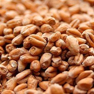 Malte Viking Wheat (trigo) - 25 Kg (SACA)