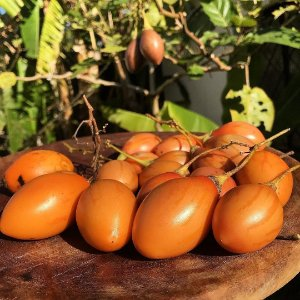 Tamarilho (tomate De Árvore) - 1 Muda
