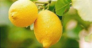 Limão Siciliano (Enxertado) - 1 Muda Média - Próxima de Produzir!