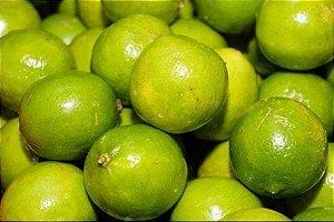Limão Galego (Enxertado) - 1 Muda Média - Próxima de Produzir!