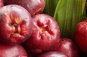 Jambo - 1 Muda  Média - Cultivo Livre De Agrotóxicos